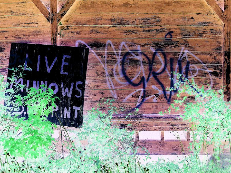 Sign Photograph - Live Minnows by Dietrich ralph  Katz