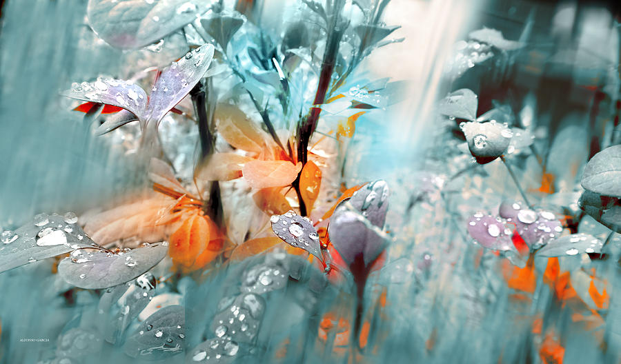 Autumn Photograph - Lluvia by Alfonso Garcia