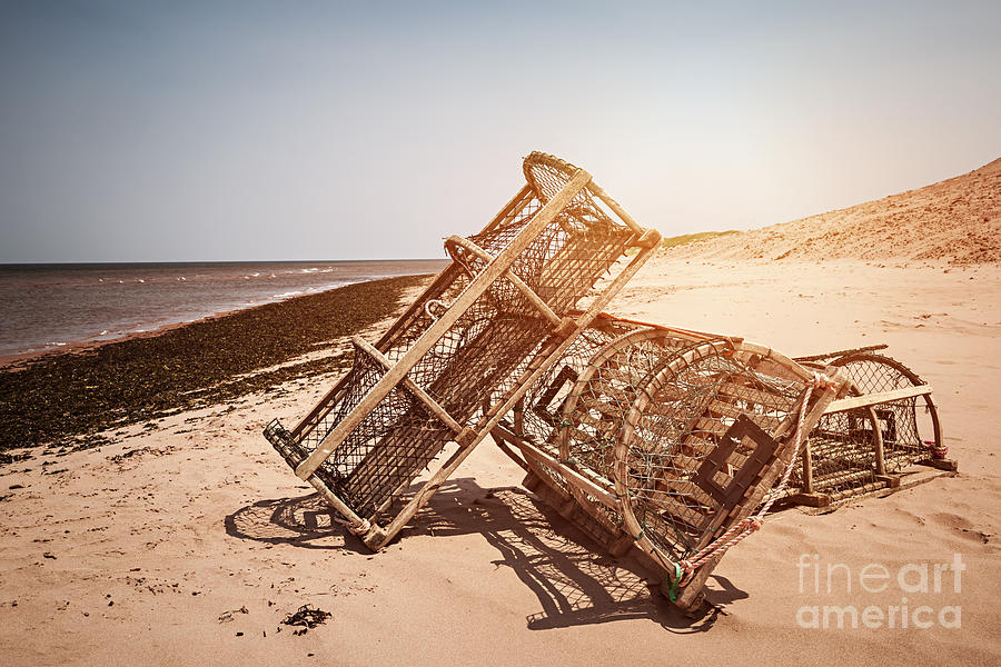 Lobster Photograph - Lobster Traps On Beach by Elena Elisseeva