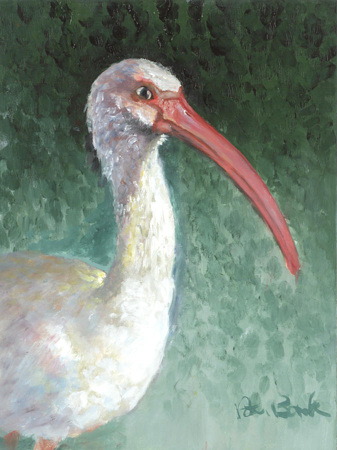 Wildlife Painting - Lone Ibis by Peter Bonk
