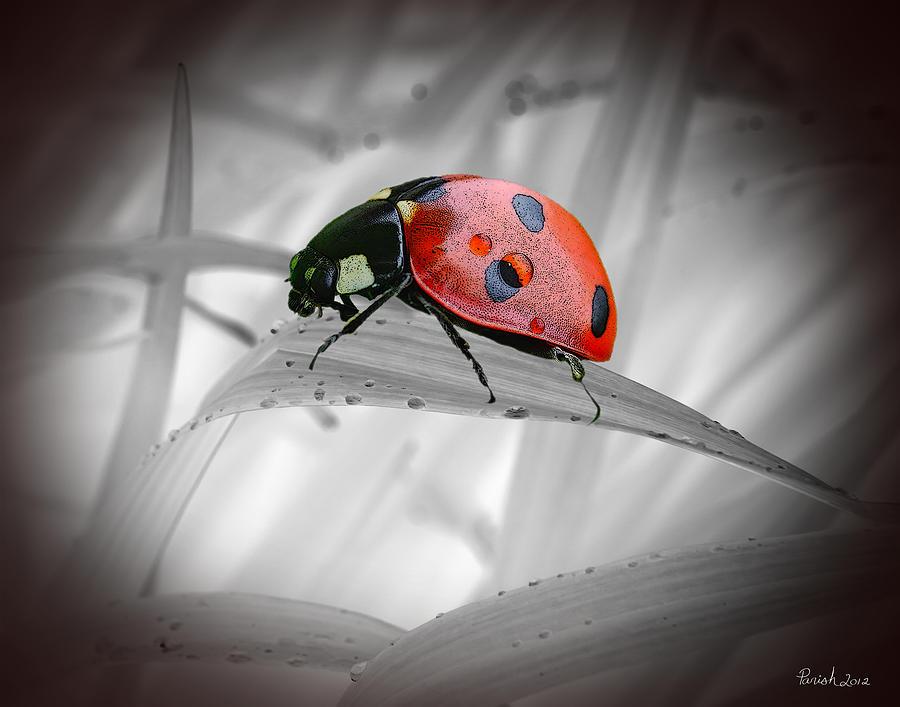 Lone Ladybug Photograph by Patti Parish