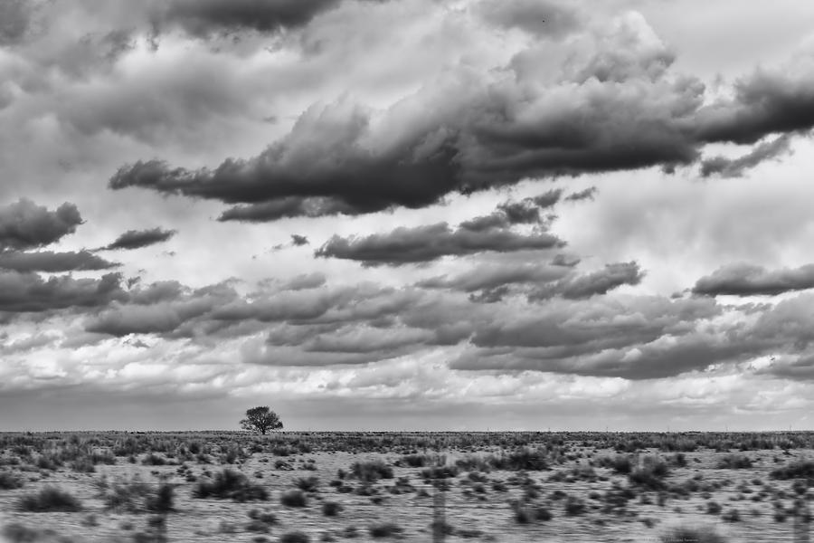 Tree Photograph - Lonesome Tree Bw by Alan Tonnesen