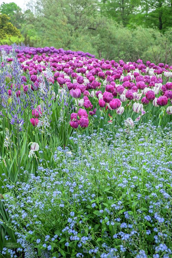 Abigail Photograph - Longwood Gardens, Spring Flowers by Lisa S. Engelbrecht