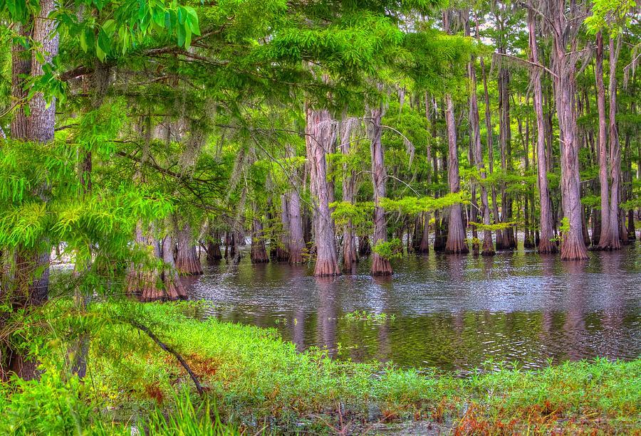 Bayou Photograph - Louisiana Bayou by Ester McGuire