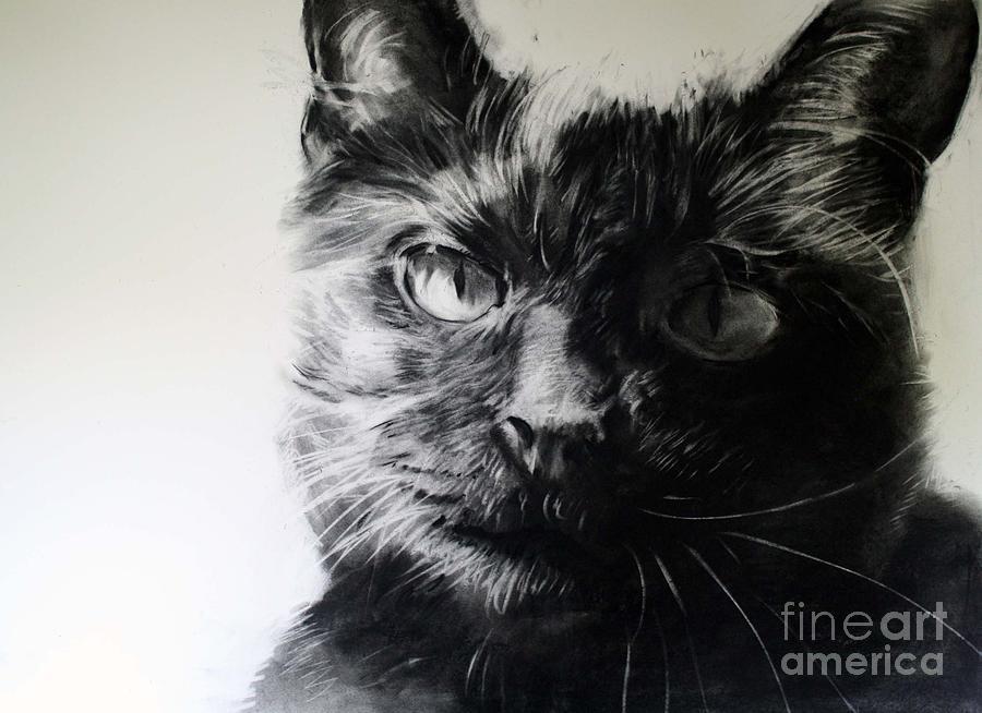 Cat Drawing - Love by Valerie  Bruzzi