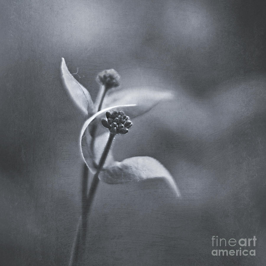 Honeysuckle Photograph - Lovers Dance by Maria Ismanah Schulze-Vorberg