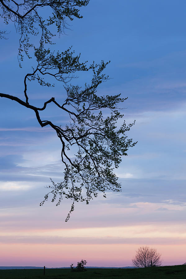 Vertical Photograph - Low Angle View Of Tree At Dawn, Dark by Panoramic Images