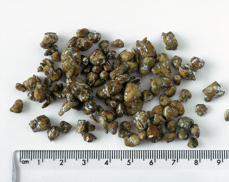 Magic Truffles by Science Photo Library