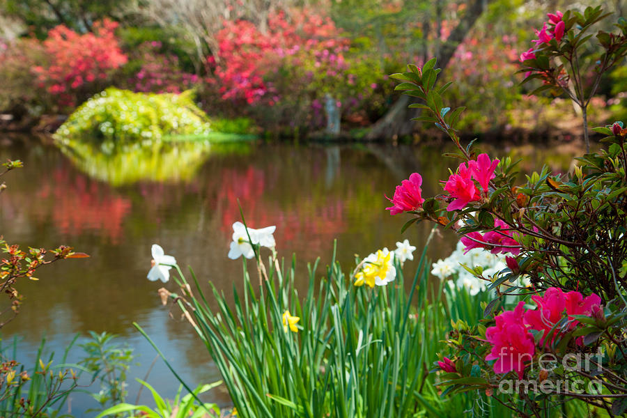 Pond Photograph - Magnolia Plantation And Gardens by Iris Greenwell
