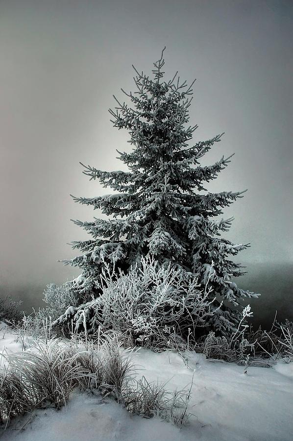 Landscape Digital Art - Majestic Winter by Heather  Rivet