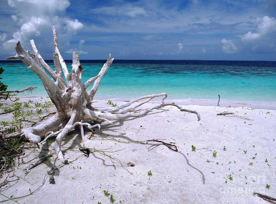 Maldives Photograph - Maldives 11 by Giorgio Darrigo