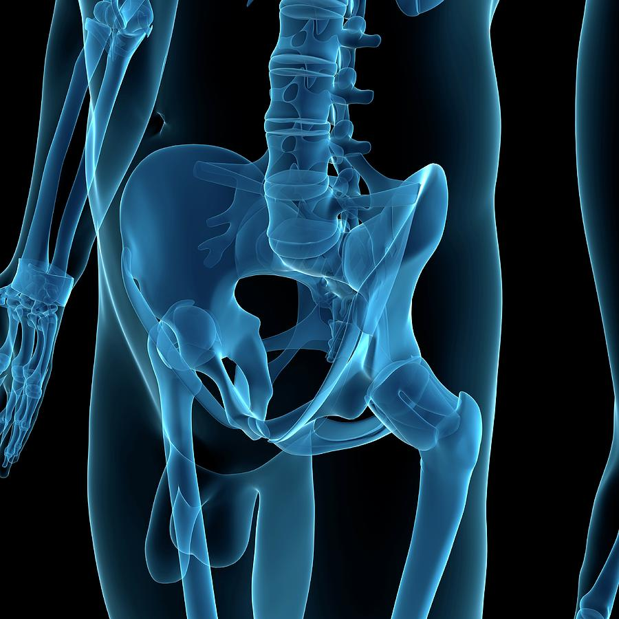 Artwork Photograph - Male Pelvis by Sciepro/science Photo Library
