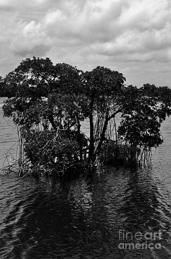 Mangrove Photograph - Mangrove Island by Andres LaBrada
