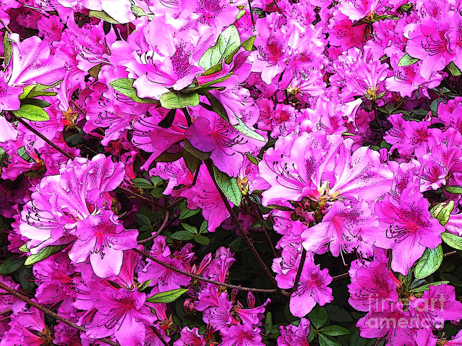 Floral Digital Art - Manik by Machiko Studio