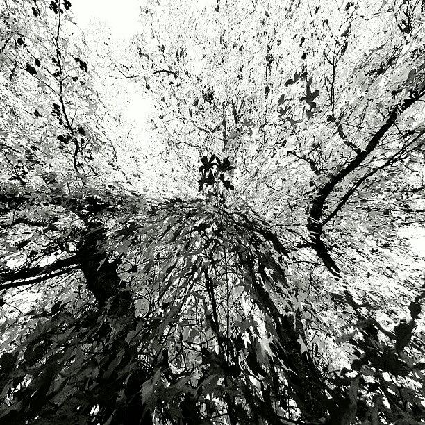 Abstract Photograph - Maple Tree Inkblot by CML Brown
