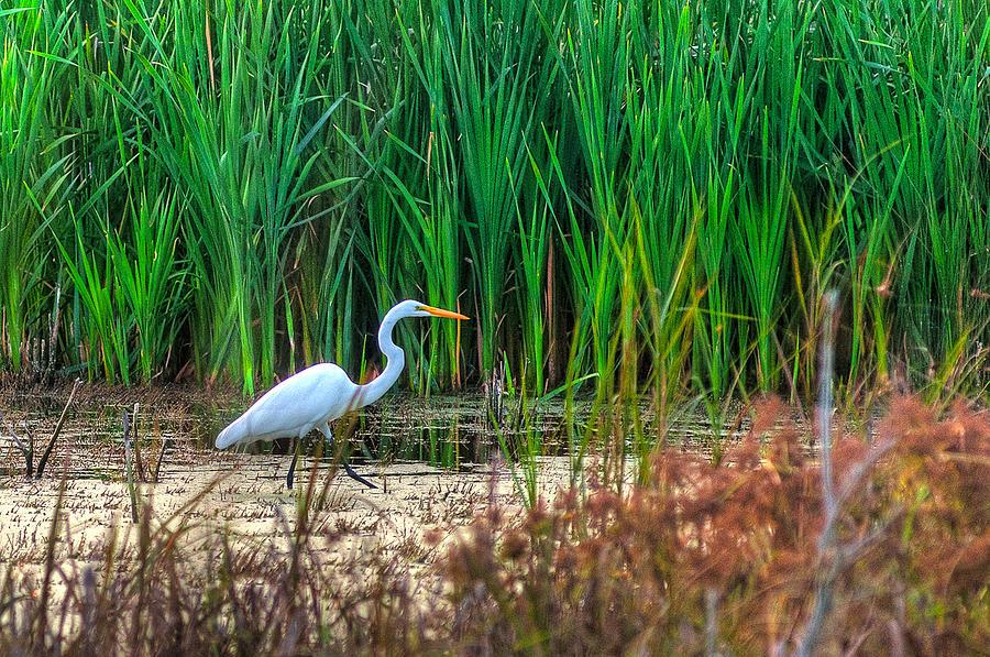 Egret Photograph - Marsh Hunter by Scott Hansen