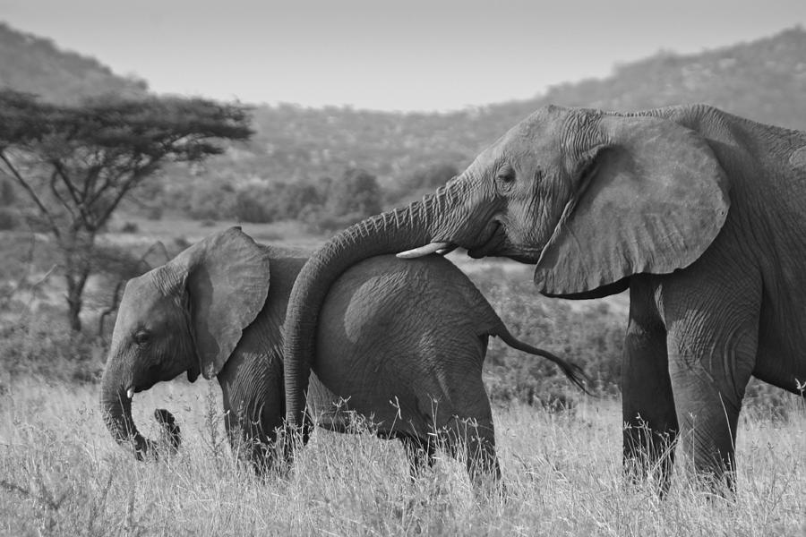 Africa Photograph - Maternal Love by Michele Burgess