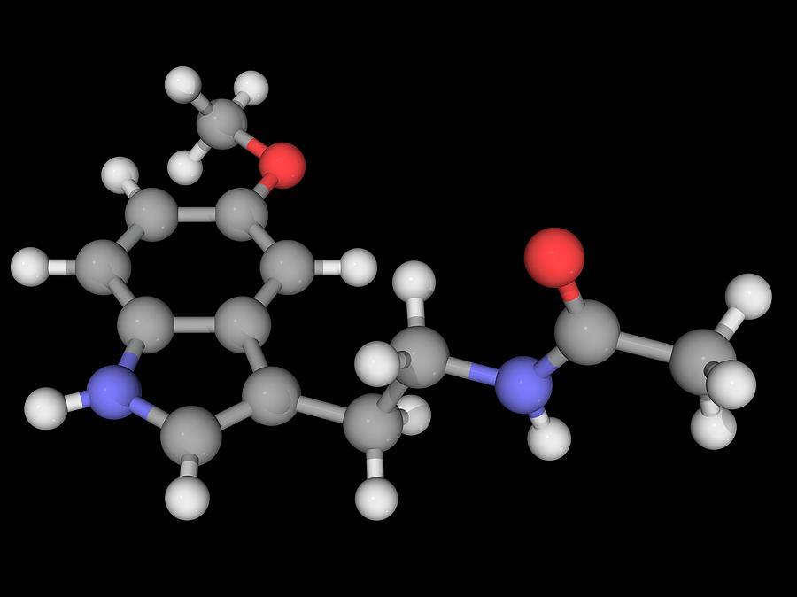 Artwork Photograph - Melatonin Molecule by Laguna Design/science Photo Library