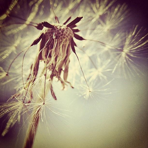 Wish Photograph - #mgmarts #dandelion #makeawish #wish by Marianna Mills