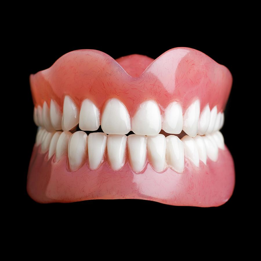 Model Of Human Teeth Photograph By Science Photo Library