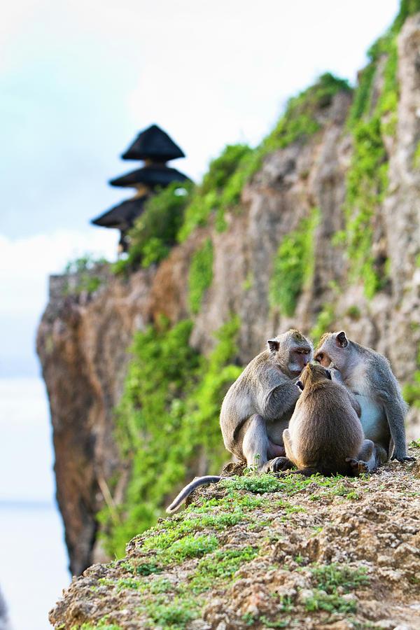 Monkeys At Uluwatu Temple Photograph by Matthew Micah Wright
