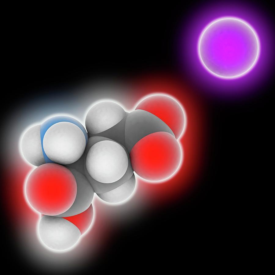 Amino Acid Photograph - Monosodium Glutamate Molecule by Laguna Design