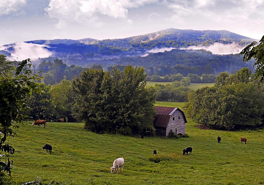 Landscape Photograph - Morning Grazing by Susan Leggett