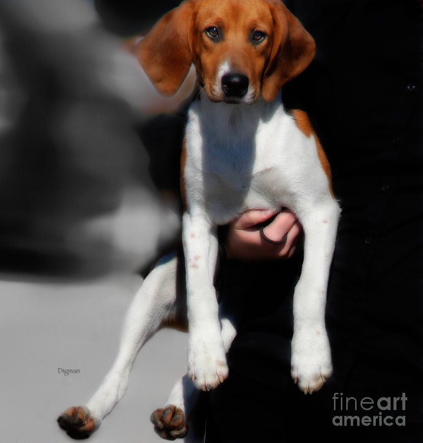 Dog Photograph - Mother And Child  by Steven Digman