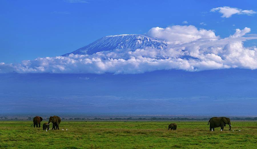 Animal Photograph - Mount Kilimanjaro by Babak Tafreshi