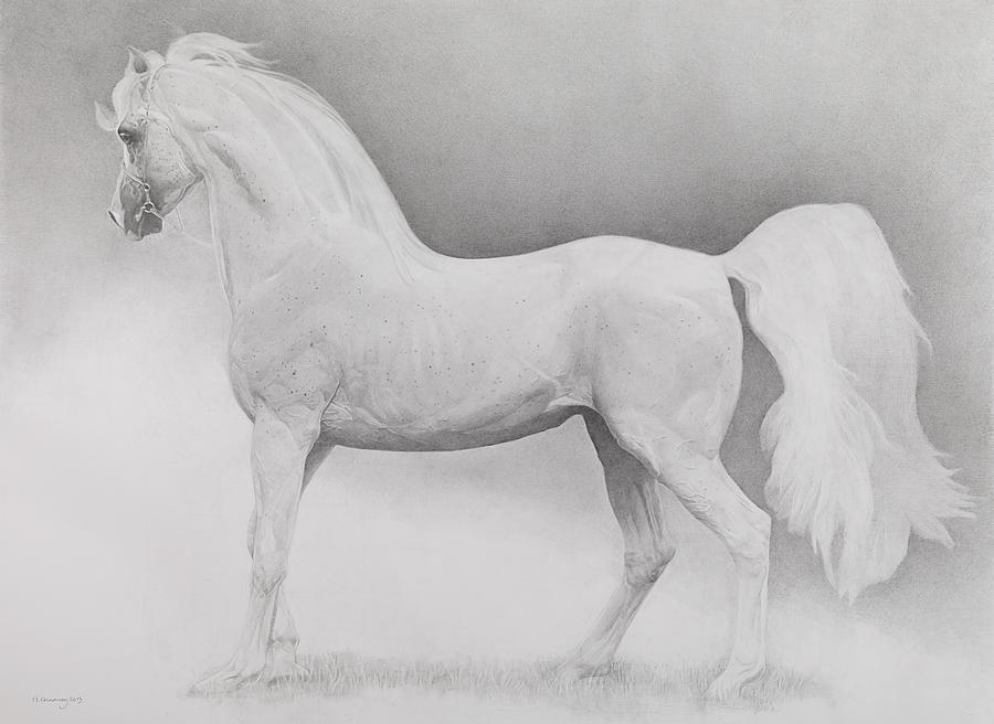 Animal Drawing - Moving Image by Emma Kennaway
