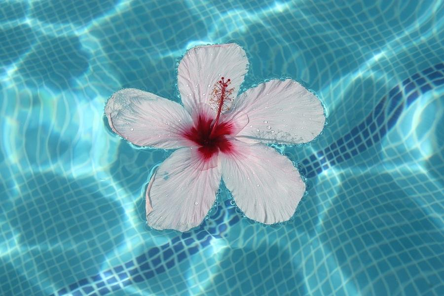 Foto Photograph - My August Flower by Roger Cummiskey