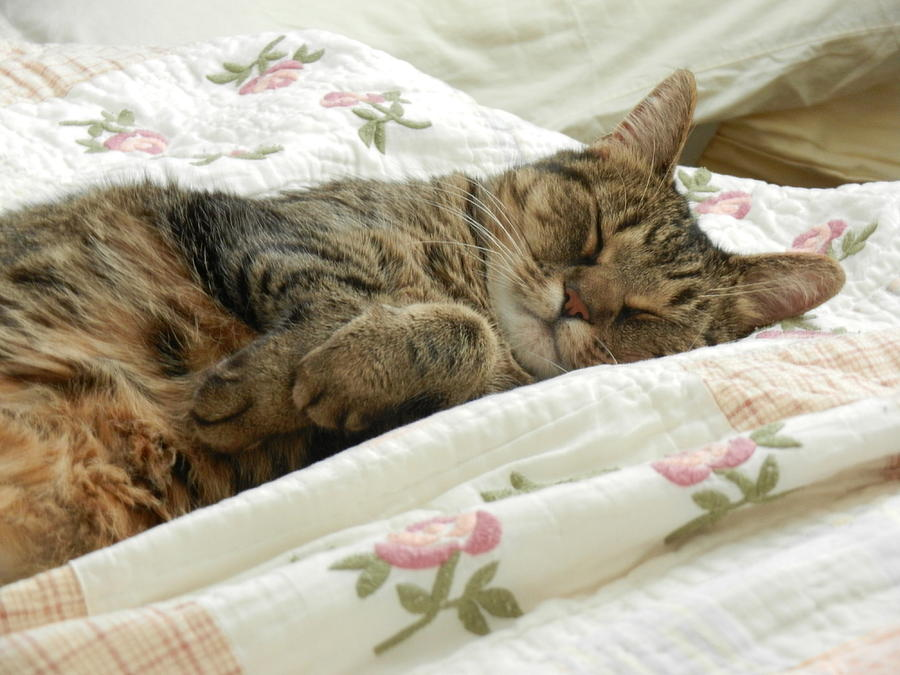 Cat Nap Photograph - Napping Cat by Katherine McLeister