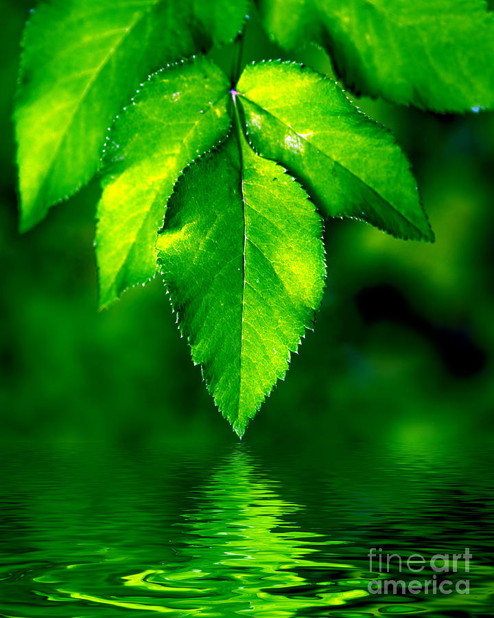 leaves natural background bednarek michal photograph abstract 25th uploaded november which