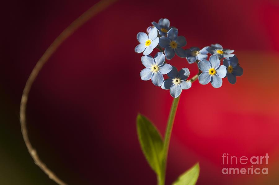 Abstract Photograph - Nature Abstract by Svetlana Sewell