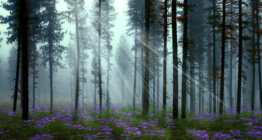 Forest Digital Art - Natures Beauty by Nina Bradica