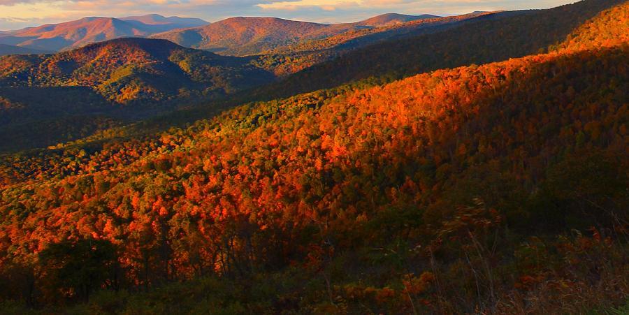 Autumn Photograph - Natures Color Palette by Candice Trimble