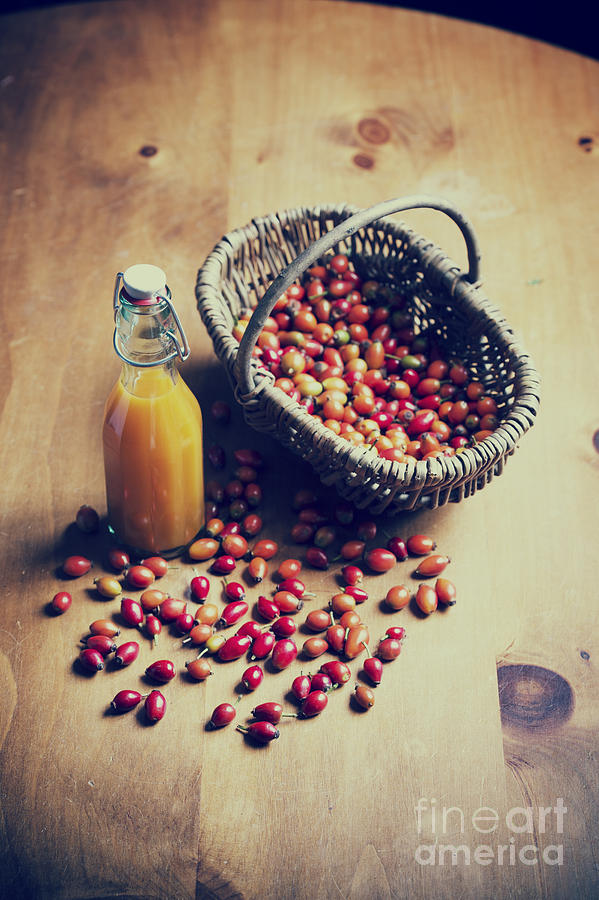Rosehip Photograph - Natures Harvest by Tim Gainey