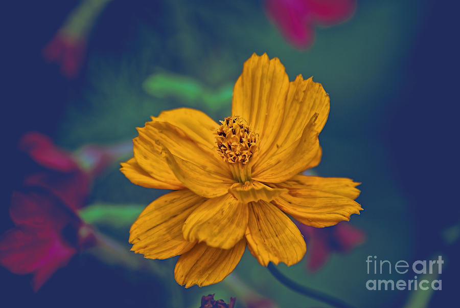 Flower Photograph - Natures Smile by Joe McCormack Jr