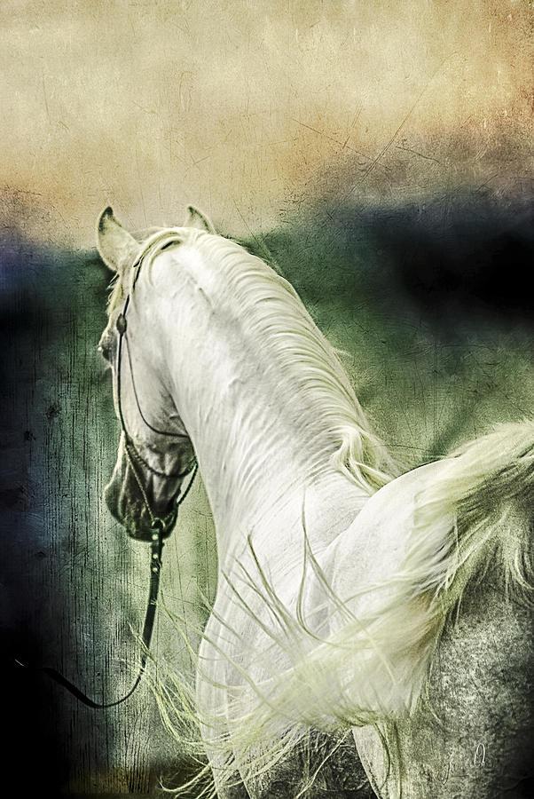 Animal Digital Art - New Year Sharp by Janice OConnor