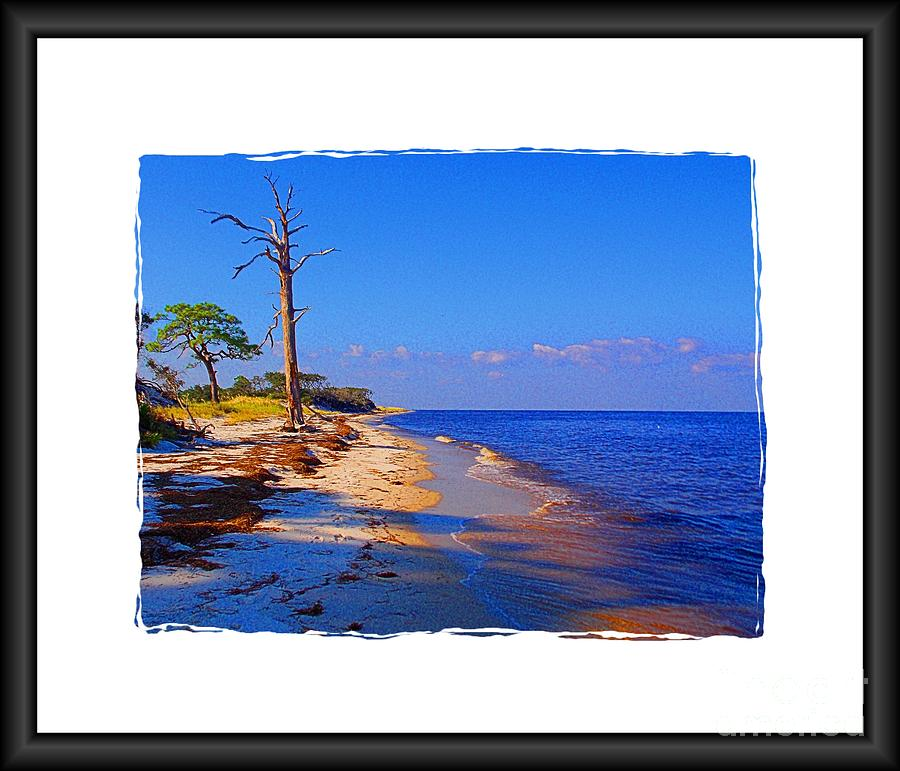 North Florida Beach Photograph - North Florida Beach by Annette Allman