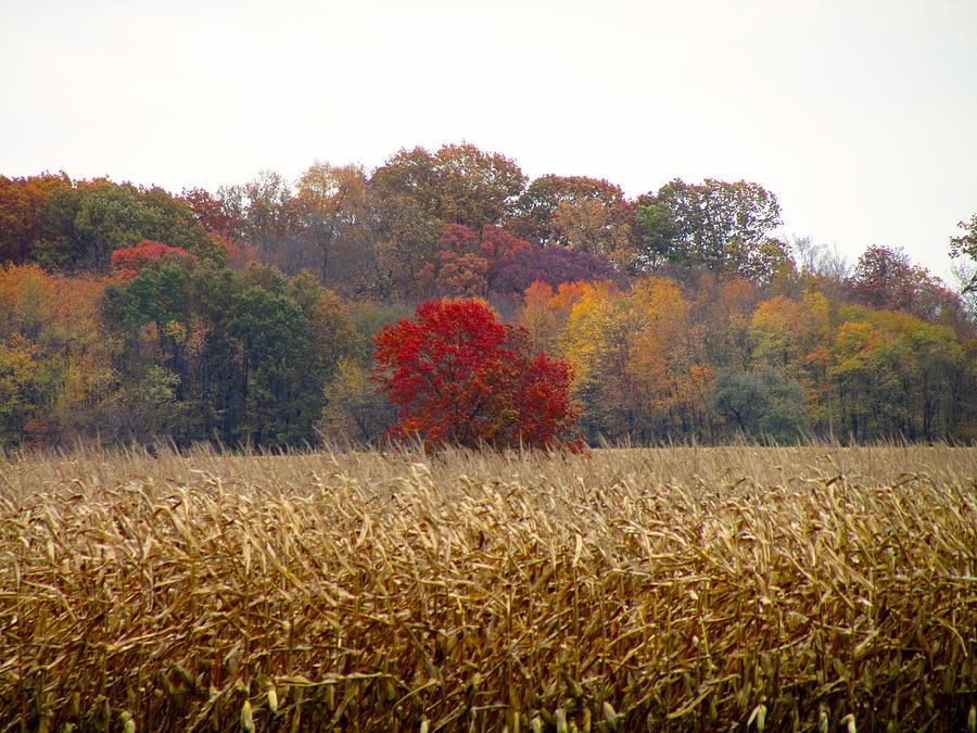 November Photograph - November by Andrea Dale
