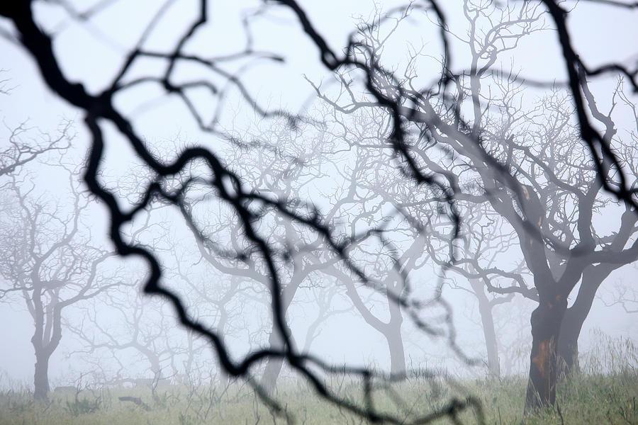 Huelva Photograph - Oak Forest Quercus Ilex Burned by David Santiago Garcia