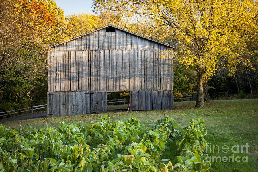 America Photograph - Old Tobacco Barn by Brian Jannsen