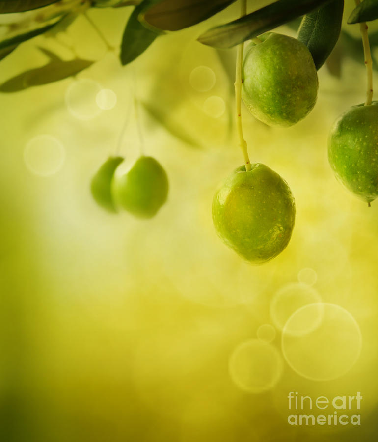 Aged Photograph - Olives Design Background by Mythja  Photography