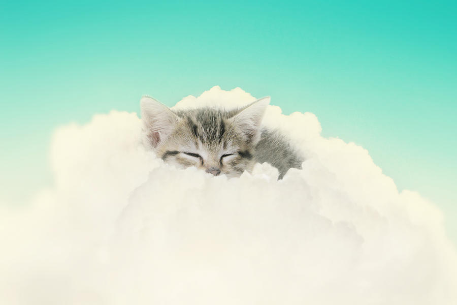 Kitten Photograph - On Cloud Nine by Amy Tyler