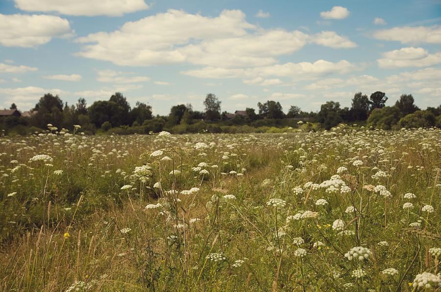 Meadow Photograph - On The Summer Meadow. Russia by Jenny Rainbow