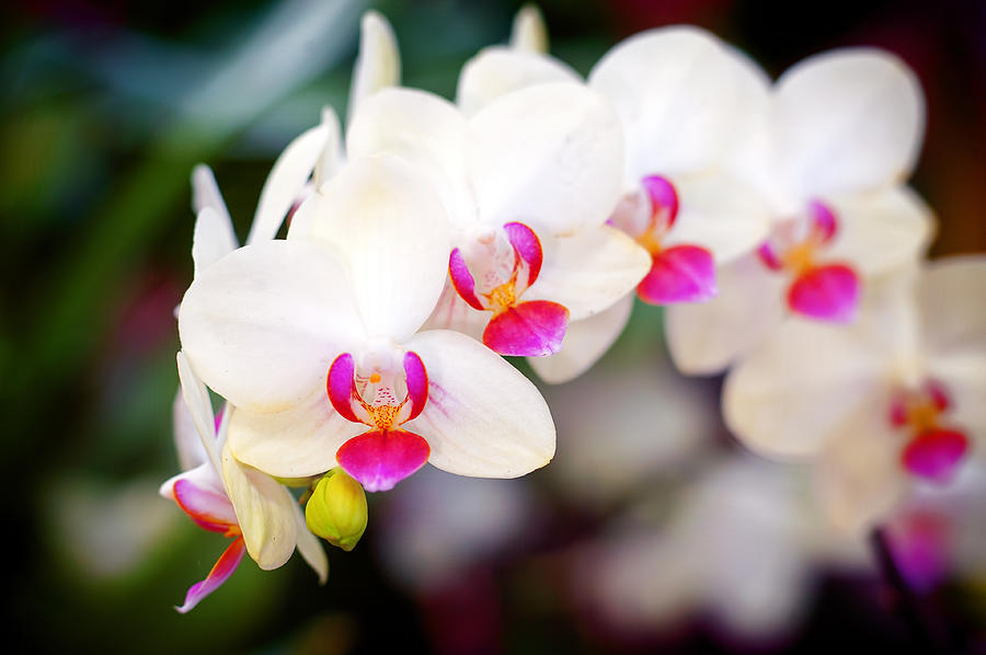 Orchid Beauty Photograph by Tammy Smith