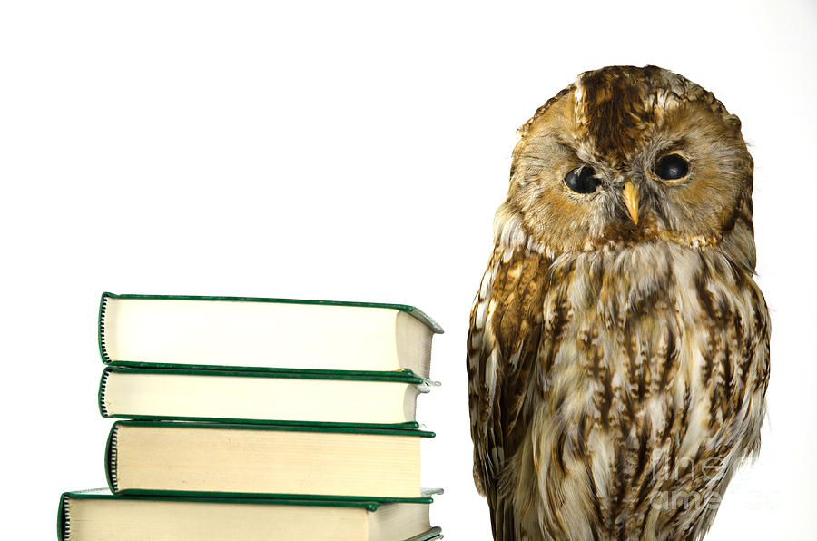 Background Photograph - Owl At A Book Pile by Kennerth and Birgitta Kullman