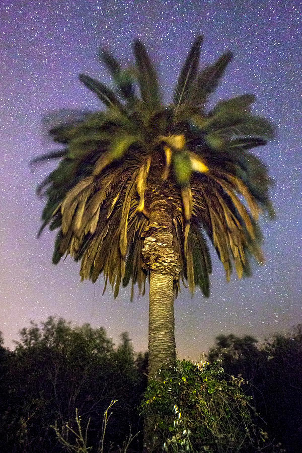 Constellation Photograph - Palmtree In Alentejo by Andre Goncalves