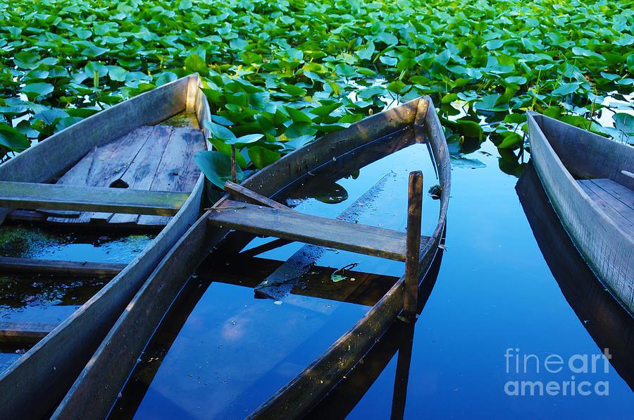 Autumn Photograph - Pateira Boats by Carlos Caetano